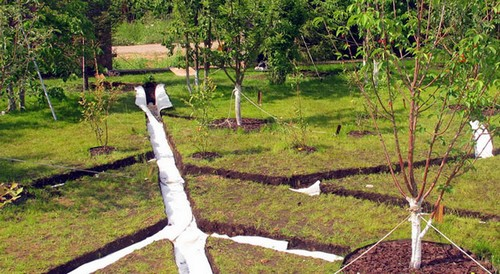 Система отвода воды в саду